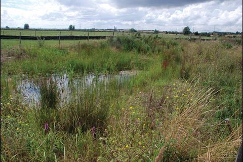 New ponds to house the newts have been created just outside the main site (pictured)